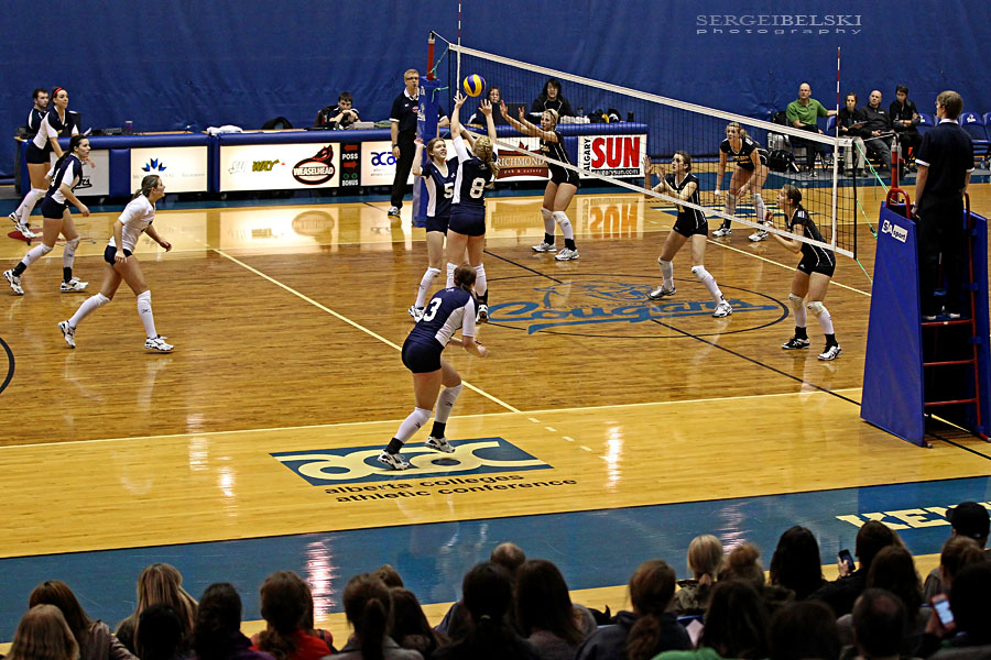 mount royal university volleyball sergei belski photo