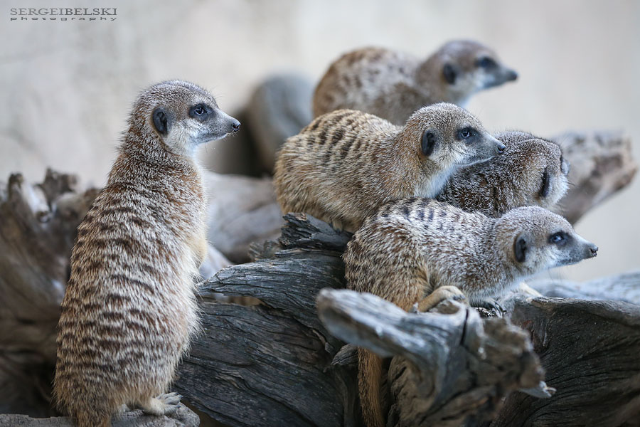 family calgary zoo animals photographer sergei belski photo