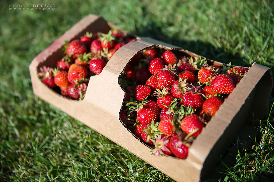 strawberries with oliver sergei belski photo