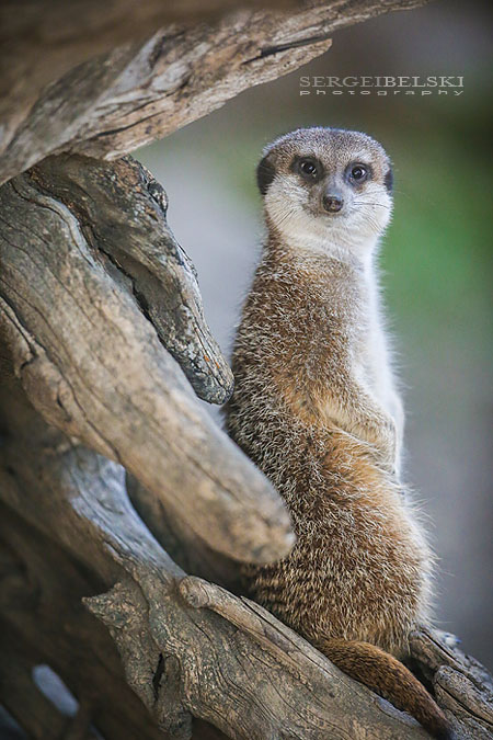 calgary zoo animals photographer sergei belski photo