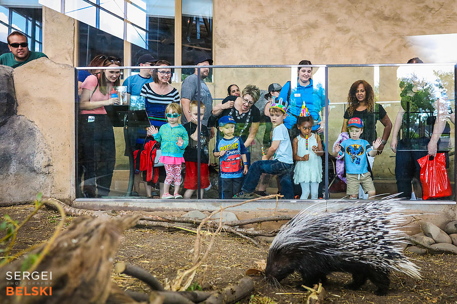 calgary zoo birthday event photographer sergei belski photo